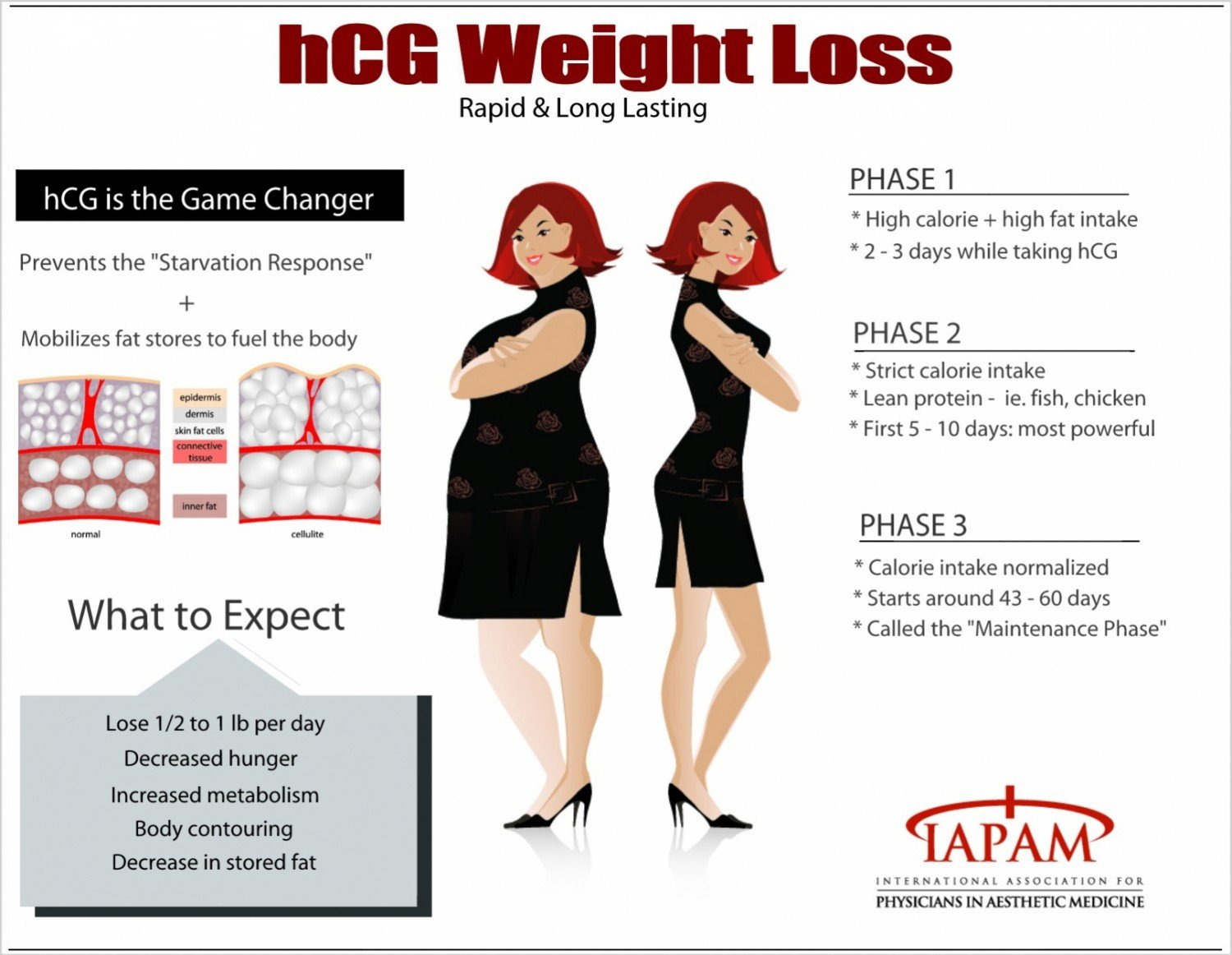 INFOGRAPH: STAGES OF WEIGHT LOSS WITH HCG